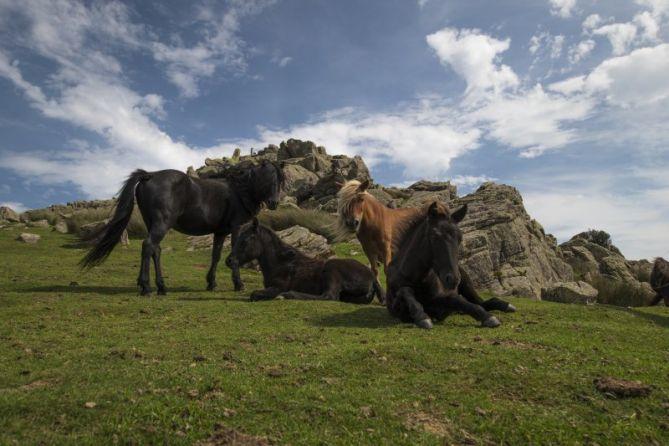 caballos modelo